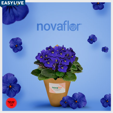Nova Flor - Floricultura
